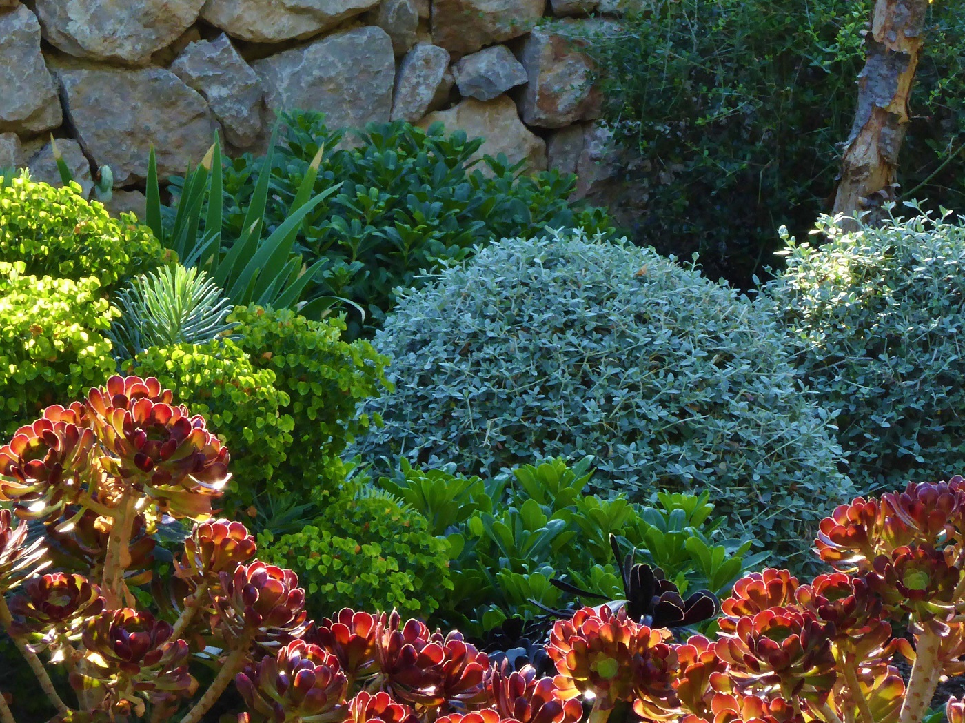 Menu For Olive Garden: Autumn Is The Time To Plant In Mallorca